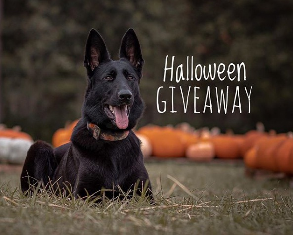 Halloween Giveaway - Enter For Chance To Win Rexspecs Goggles